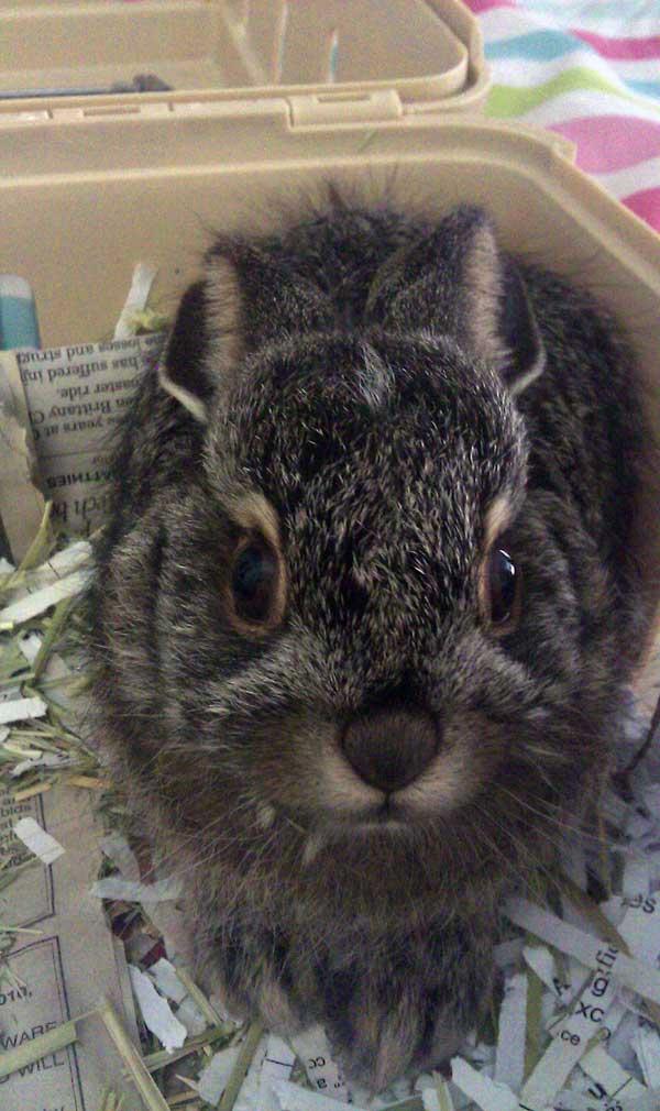 5-27-11 Daily Wildlife Picture Jack Rabbit Baby