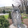 6-26-11 Daily Wildlife Picture Great Horned Owl Weathering Picture