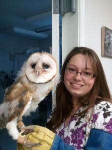 Mushu - Barn Owl (Tyto alba)