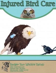 Injured Bird Care2_Page_01