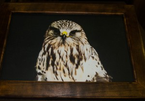 Rufio (Rough-Legged Hawk) photograph on canvas in solid cherry frame (13 x 18 inch)***