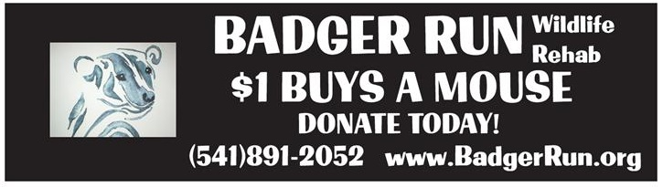 Badger Run Bumpersticker